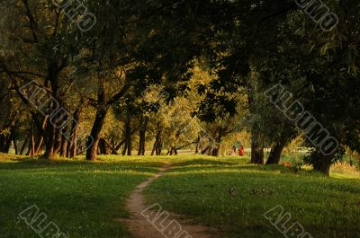 Path throught summer evening forest