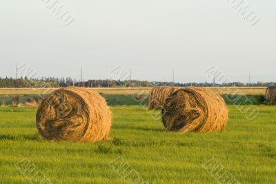 Hay Bale At Sunset