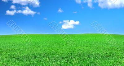 peaceful grassland