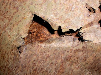 Ripped Rust