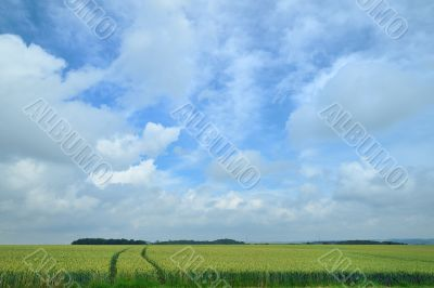 Agriculture with corn fields