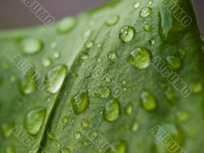 Waterdrops on the leaf