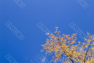 Autumn foliage against the sky