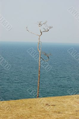 Tiny tree with lake in the background