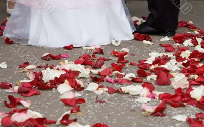 Petals of roses at feet