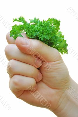 hand holds the bunch of greenery