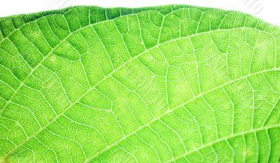 sunbeam on a leaves