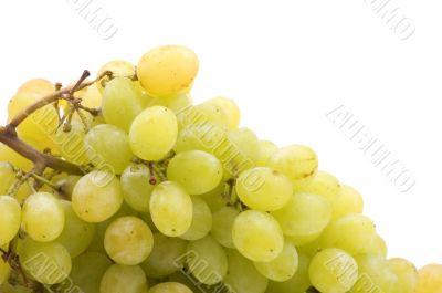 Raw grapes close up