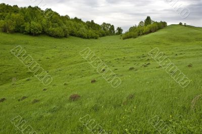 trees on slope of hill