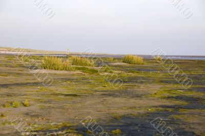 beach view of ameland during sunrise, the netherlands