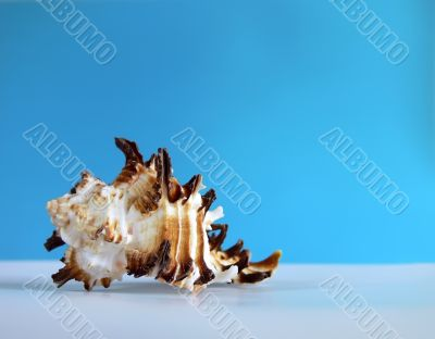 Interesting sea shell