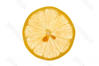 Isolated Lemon Slice on White Background