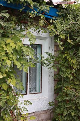 Window in leaf