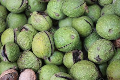 Circassian walnuts green