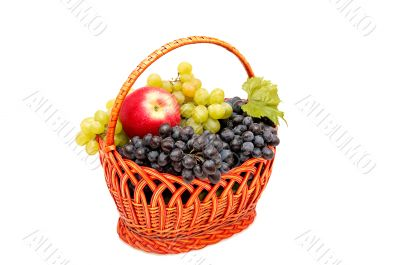 Bunches of grapes and apples in basket.