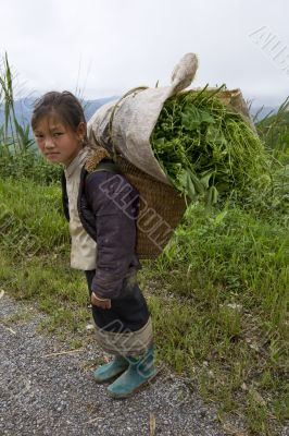 Hmong transports vegetables to the valley, Laos