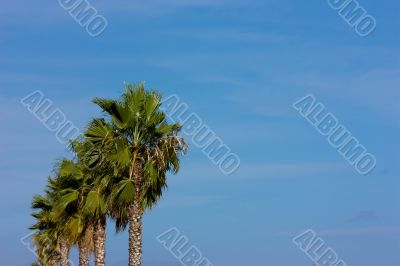Line of palms on blue sky