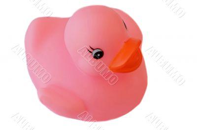 Pink plastic duck