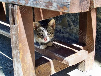 Cat under a bench