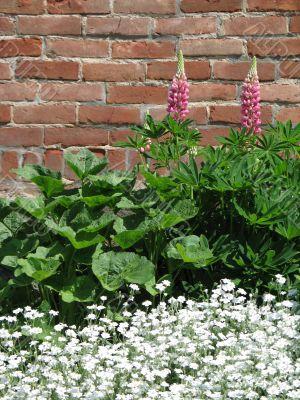 greenery against a brick wall