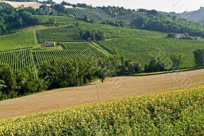 Landscape in the Marche region