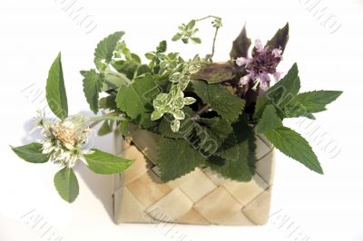 Fresh herbs in basket