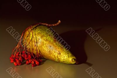 Pears and the ashberry twig