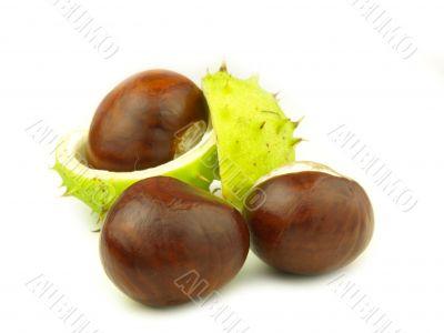 chestnut very close