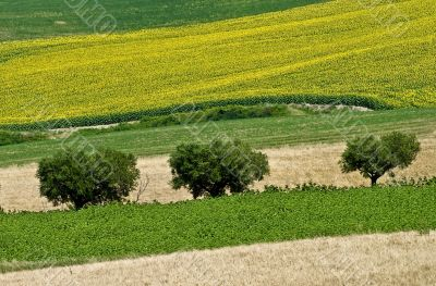 Landscape of the Marche region at summer