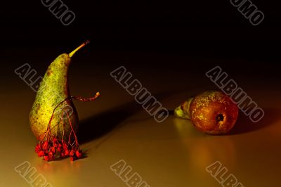 Two pears and the ashberry twig