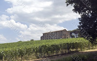Farm with vineyard in Italy