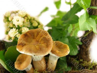 mushroom very close
