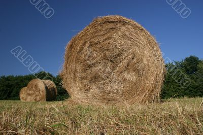 Idyllic field with hay bales in late summer