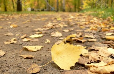 Footpath filled up by yellow leaves