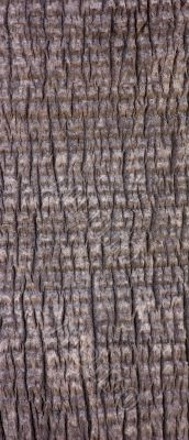 Natural Tree Bark Close Up Texture Background