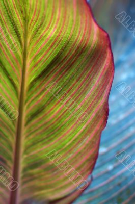 Bright colorful leaf. Creative nature.