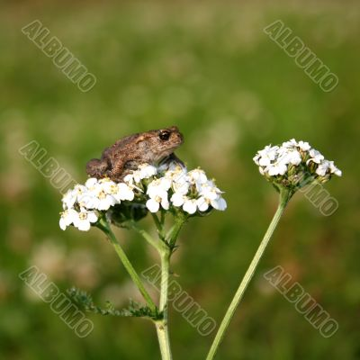 Small frog sitting on a flower