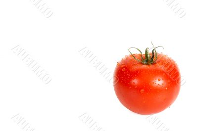 A tomato is in dew.