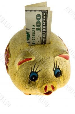 Golden piggy bank with 100 dollar