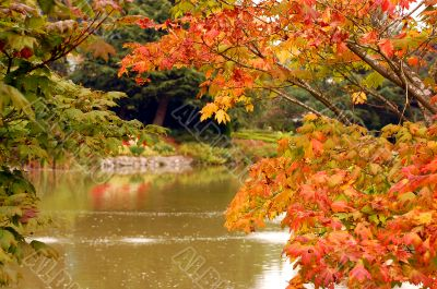 Autumn leaves over pond setting
