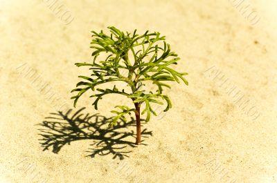 Beach sand dune grasses
