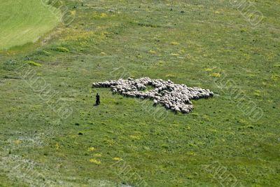Sheep-breeding in the Piana di Castelluccio