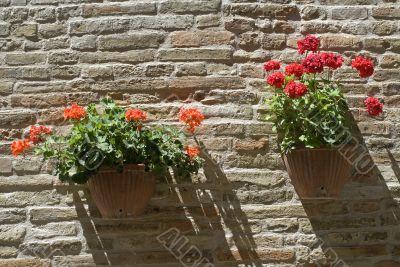 Monterubbiano - Potted plants in flower