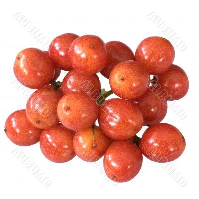 The berry of Arrowwood
