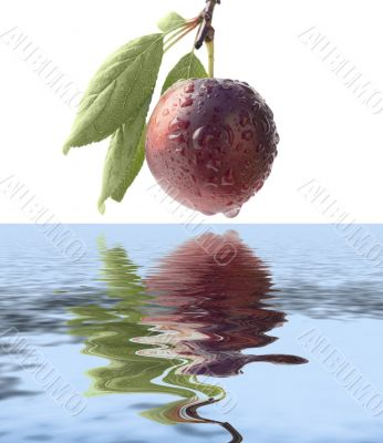 Fruits ripe violet sweet plums