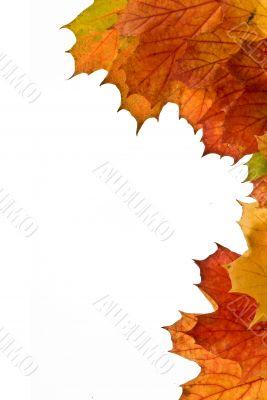 backgrounds autumn nature