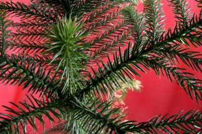exotic christmas tree