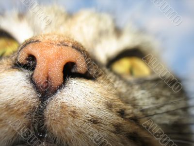 Kitty`s nose