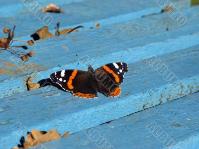 Butterfly on blue bench