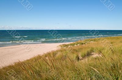 Lake Michigan Beach and Dune Grass